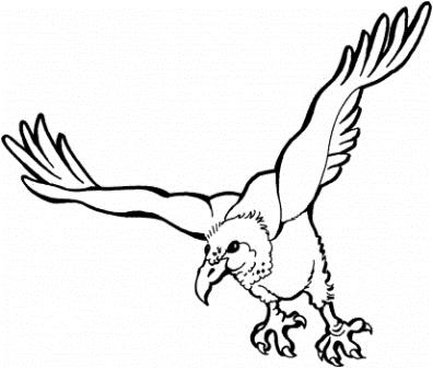 flying-vulture-coloring-page
